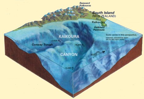Image result for kaikoura canyon images